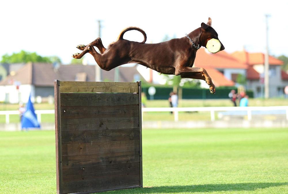 Hundeførerkonkurrencen