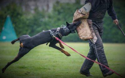 Opdatering af Hundefører Konkurrencen 2019