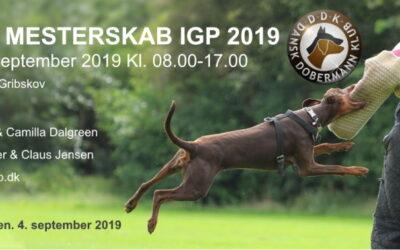 DDK – DM IGP 2019