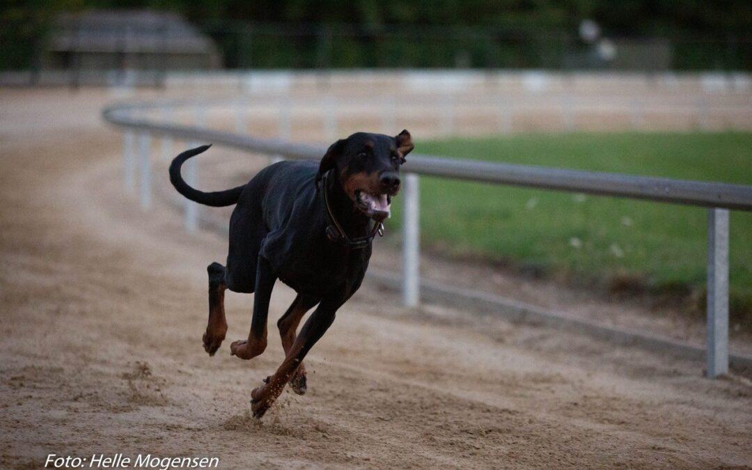 24 Juli  2021 Prøv en væddeløsbane med din hund.