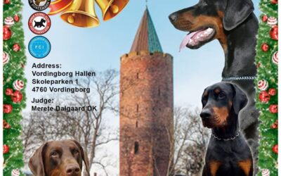 Juleudstilling DDK, 05.12.2021 i Vordingborg Hallen